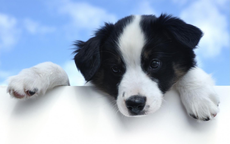 Egy cikk, amely a kutyát sem érdekli