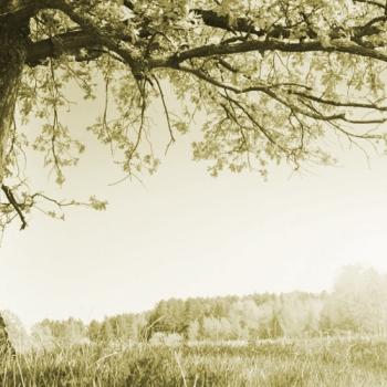 Interjú a fák alatt 5. rész - Harc és szeretet